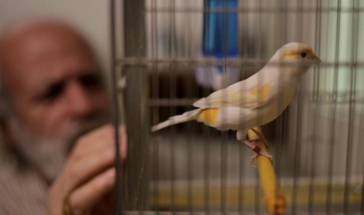 تولید فیلم کوتاه «پیرمرد و قناری» در کرج