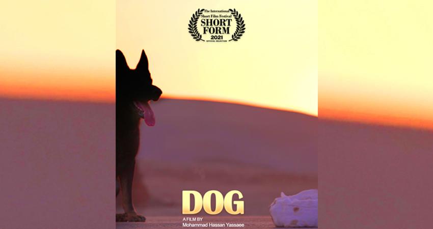 فيلم كوتاه «سگ» در جشنواره ShortForm صربستان